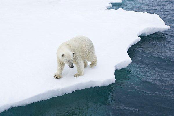 极光与北极熊的邂逅 加拿大