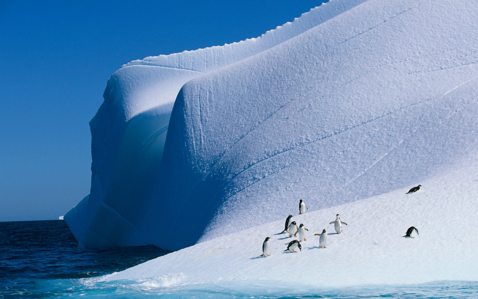 世界尽头的仙境 探秘南极