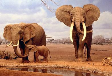 坦桑尼亚&肯尼亚 动物王国
